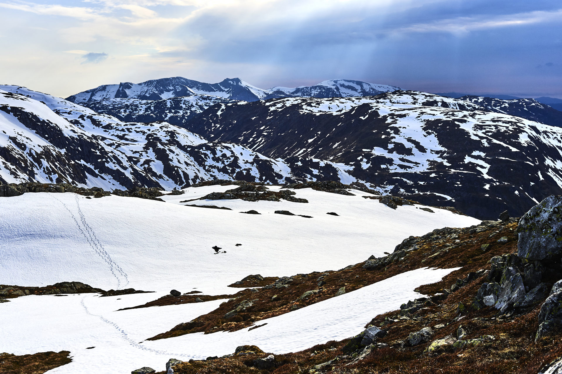 Hardangervidda in May